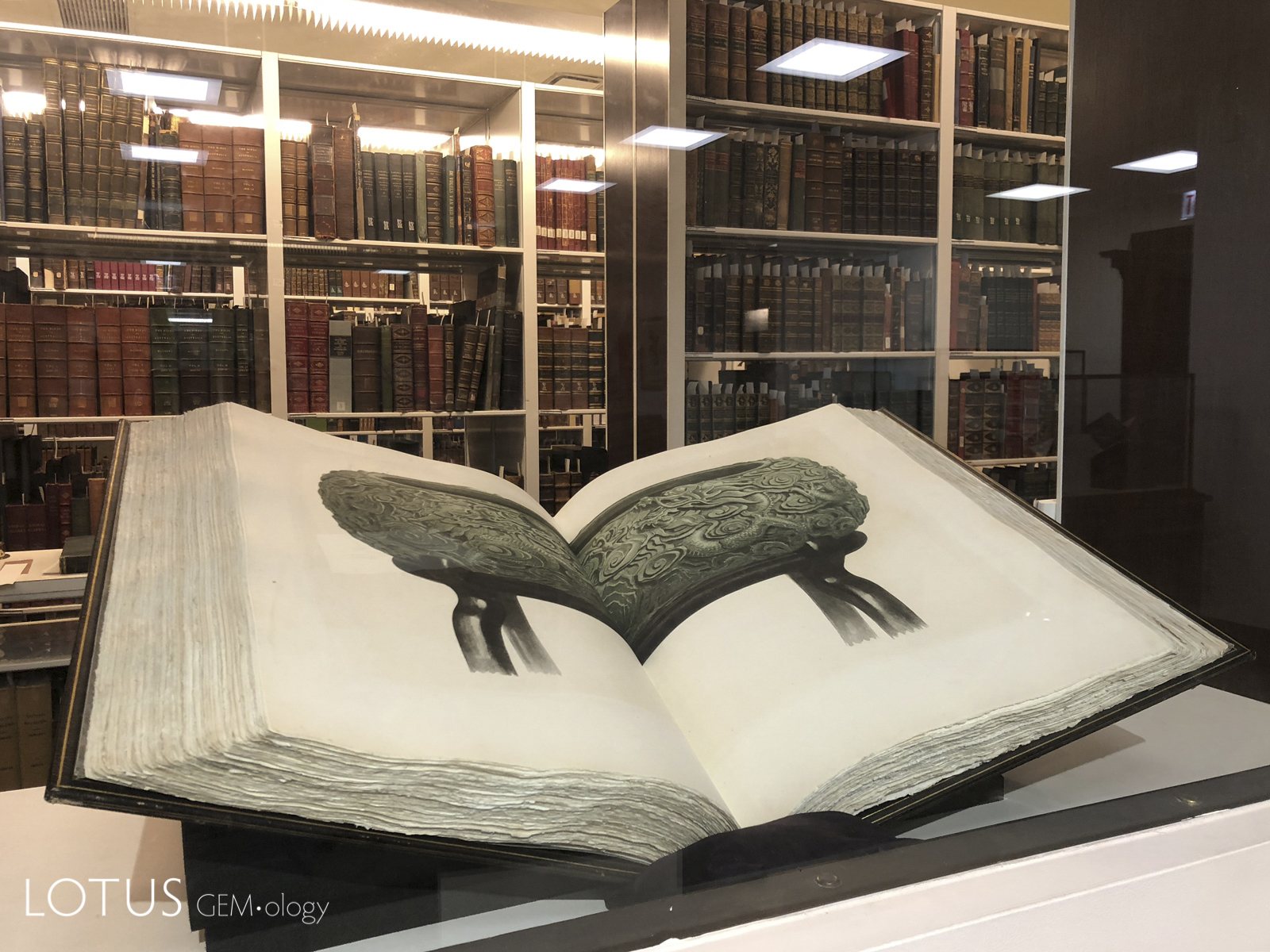 Two of the amazing lifelike plates from The Bishop Collection in the library of Chicago's Field Museum