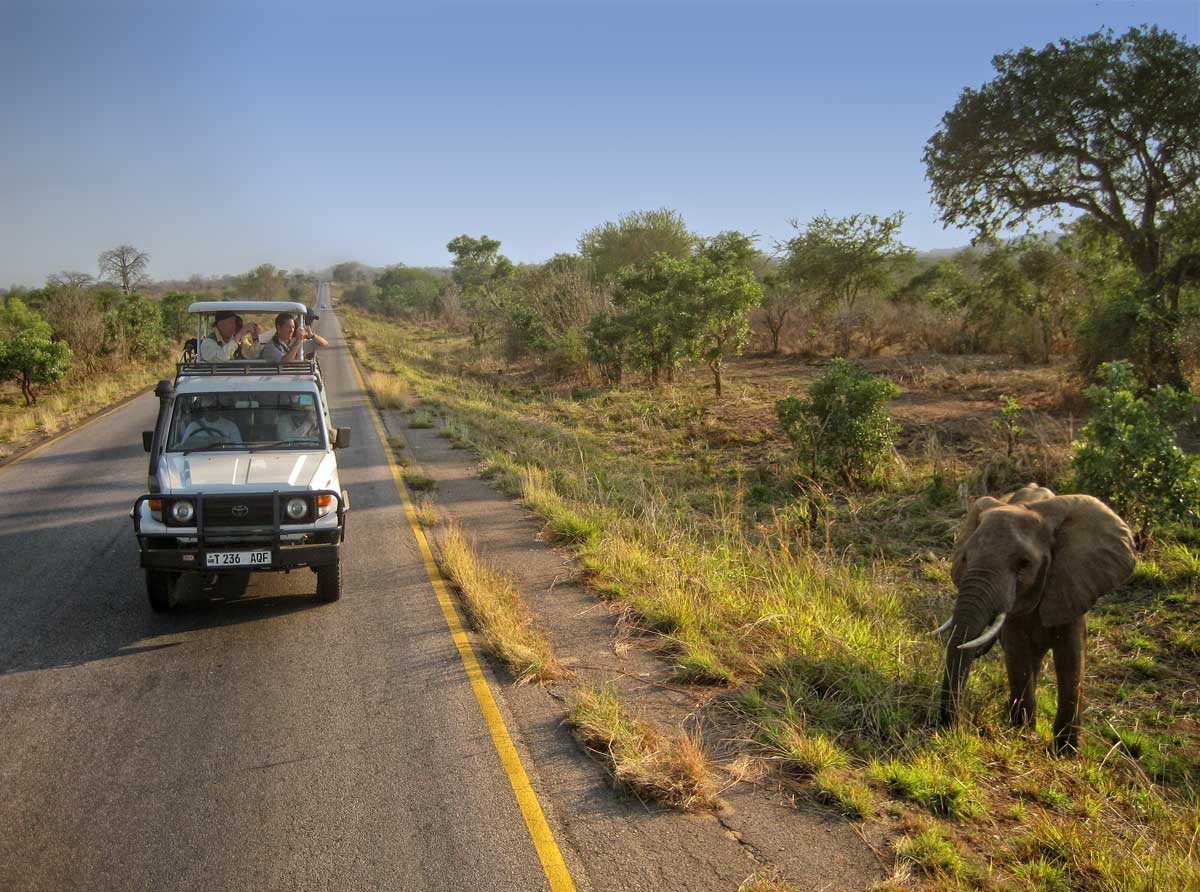 An elephant in the Mikumi National Park, along the road to Mahenge.