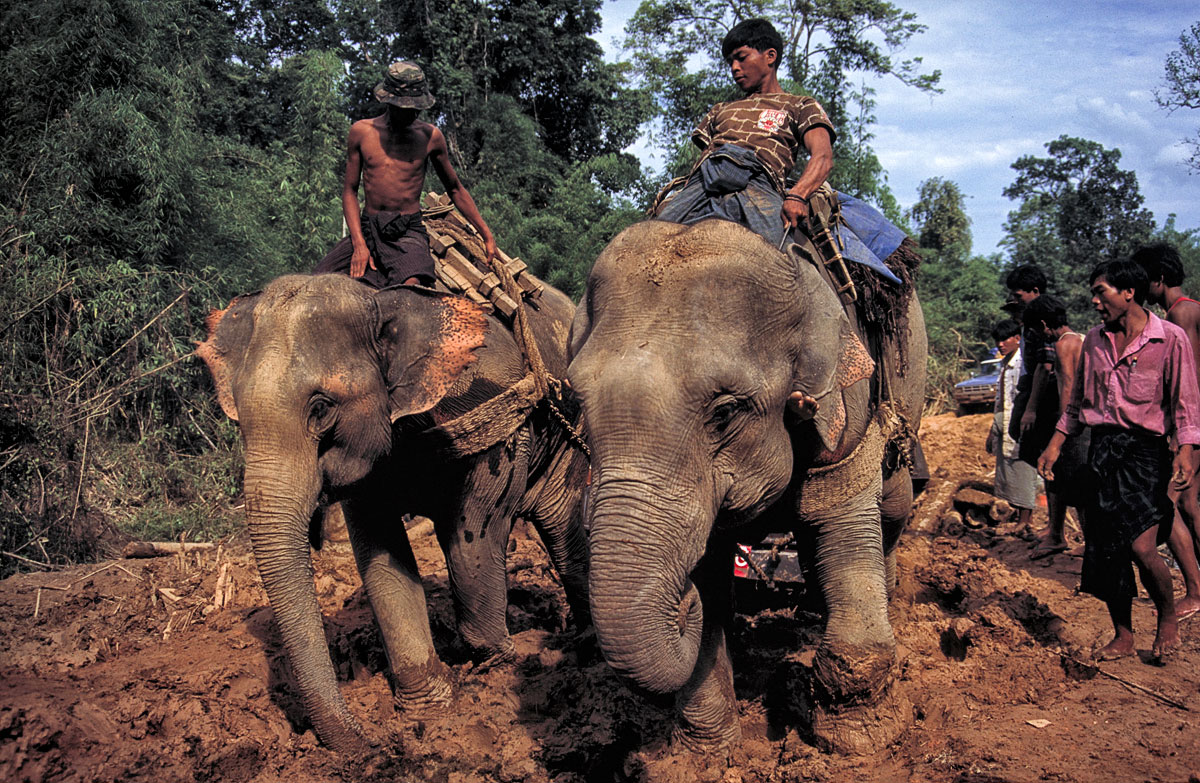 Figure 3. Both routes into Hpakan are virtually impassable during the rainy season. They require travel through dense jungle, in dirt that rapidly turns to mud. On this June 1996 trip, even the power of two elephants could not free this vehicle. Photo © Richard W. Hughes. Click on the image for a larger version.