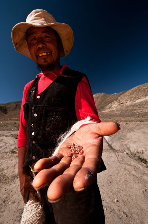 Figure 7. A sheepherder displays a few pieces of andesine he picked up at Lower Yu Lin Gu valley, near Zha Lin village, Tibet. Photo: Richard W. Hughes